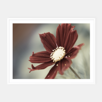 Miniatur Red Cosmos Flower Framed poster, Live Heroes