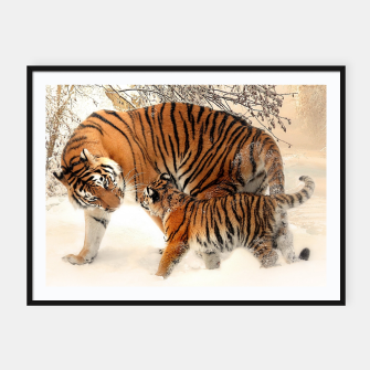 Thumbnail image of Animals Big Cats - Tiger In The Snow  Framed poster, Live Heroes