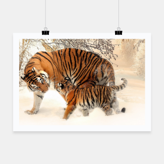 Thumbnail image of Animals Big Cats - Tiger In The Snow  Poster, Live Heroes
