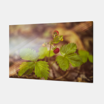 Thumbnail image of wild strawberry #1 Canvas, Live Heroes