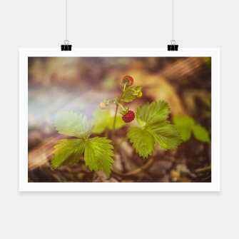 Thumbnail image of wild strawberry #1 Poster, Live Heroes