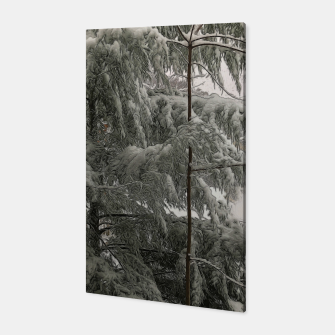 Thumbnail image of Snow Covered Pine Tree Canvas, Live Heroes