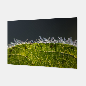 Thumbnail image of frozen leaf #1 Canvas, Live Heroes