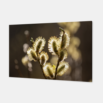 Thumbnail image of willow tree #1 Canvas, Live Heroes