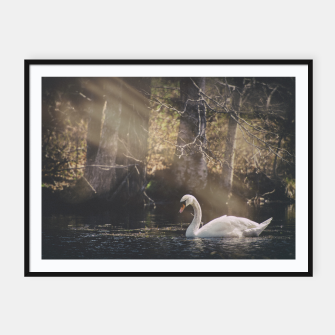Thumbnail image of swan #1 Framed poster, Live Heroes