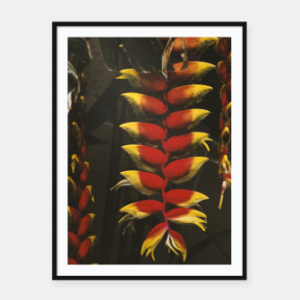 Thumbnail image of Heliconia Framed poster, Live Heroes