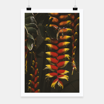 Thumbnail image of Heliconia Poster, Live Heroes