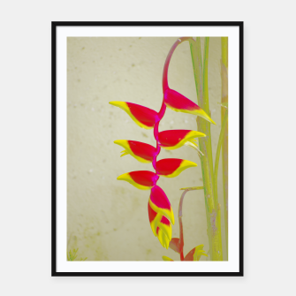Thumbnail image of Heliconia 2 Framed poster, Live Heroes