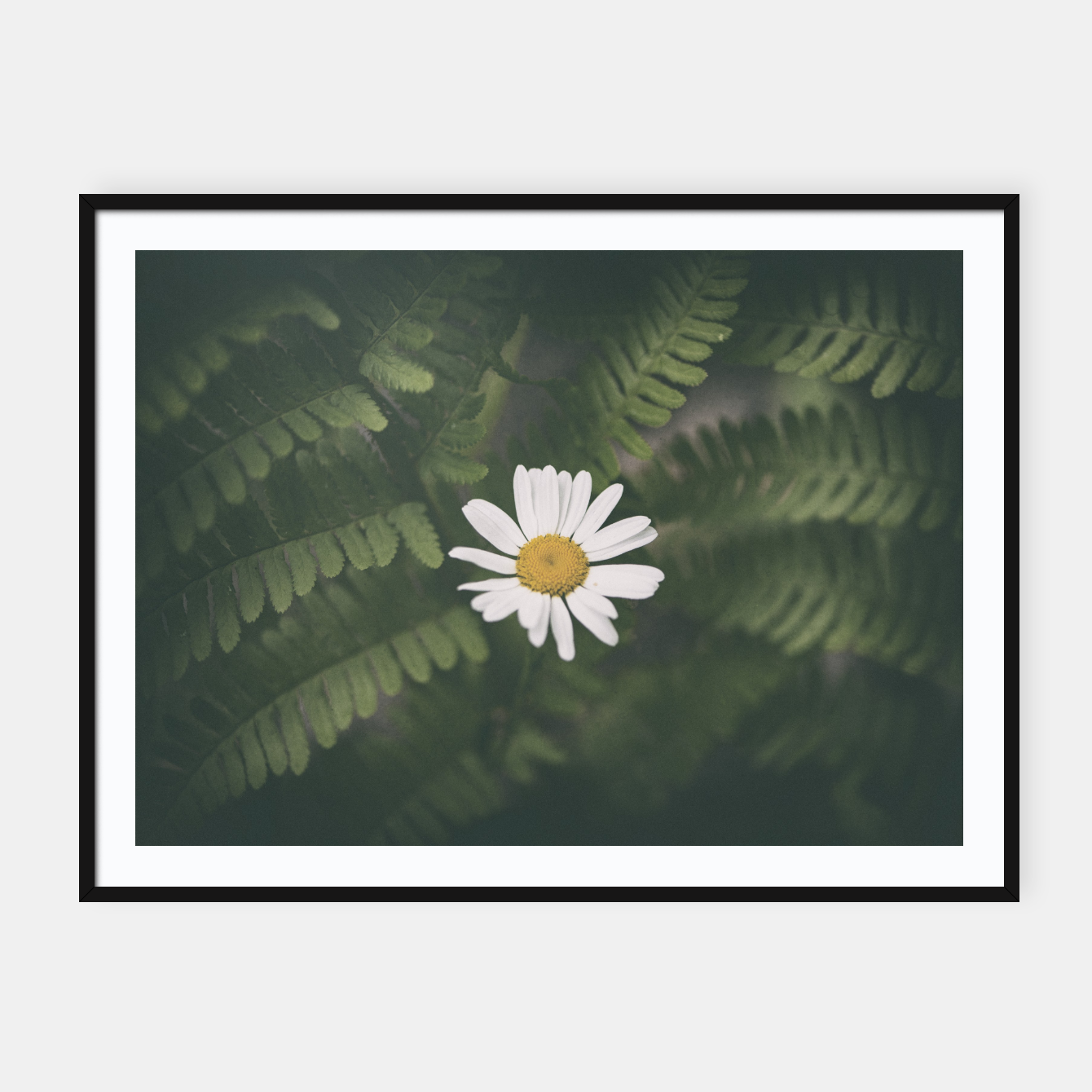 Image of daisy #1 Framed poster - Live Heroes