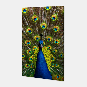 Colorful peacock Canvas thumbnail image