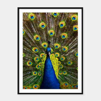 Colorful peacock Framed poster thumbnail image