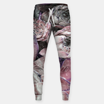 Thumbnail image of Succulent Closeup In Pink Sweatpants, Live Heroes