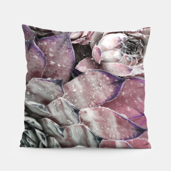 Thumbnail image of Succulent Closeup In Pink Pillow, Live Heroes
