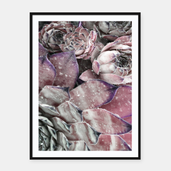 Thumbnail image of Succulent Closeup In Pink Framed poster, Live Heroes