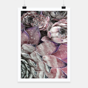 Thumbnail image of Succulent Closeup In Pink Poster, Live Heroes