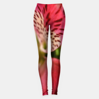 Miniaturka Red Flower Leggings, Live Heroes