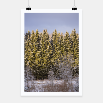 Miniaturka Sunny winter forest Poster, Live Heroes