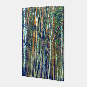 Birch forest  Canvas thumbnail image