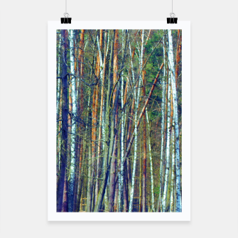 Birch forest  Poster thumbnail image