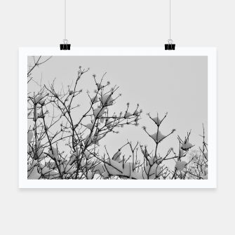 Thumbnail image of Snow on branches Poster, Live Heroes