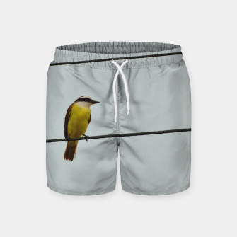 Great kiskadee Swim Shorts thumbnail image