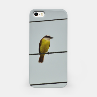 Great kiskadee iPhone Case thumbnail image