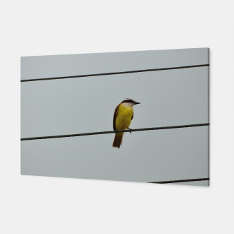 Great kiskadee Canvas thumbnail image