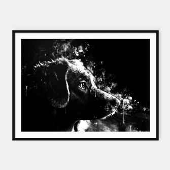 retriever dog ws bw Framed poster thumbnail image
