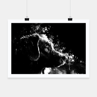retriever dog ws bw Poster thumbnail image