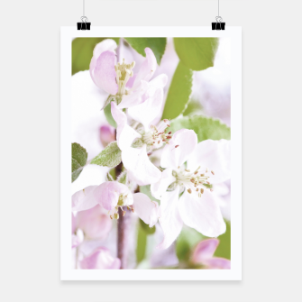 Thumbnail image of Apple Tree Blossoms Poster, Live Heroes