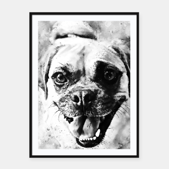 Thumbnail image of happy pug dog wsbw Framed poster, Live Heroes