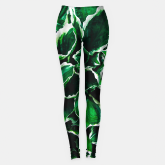 Thumbnail image of Hosta undulata albomarginata vibrant green plant leaves Leggings, Live Heroes