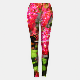 Miniaturka Bumble Bee and Blood Currant Ribes Sanguineum std Leggings, Live Heroes