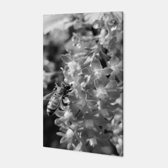 Miniaturka Bee and Blood Currant Ribes Sanguineum bw Canvas, Live Heroes