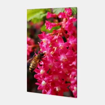 Miniaturka Bee and Blood Currant Ribes Sanguineum std Canvas, Live Heroes