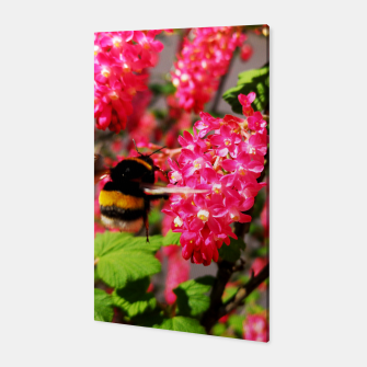 Miniaturka Bumble Bee and Blood Currant Ribes Sanguineum std Canvas, Live Heroes
