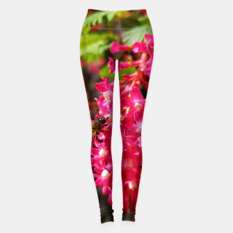 Miniaturka Bee and Blood Currant Ribes Sanguineum std Leggings, Live Heroes
