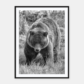 Miniature de image de Alaskan Grizzly Bear - Black and White Framed poster, Live Heroes
