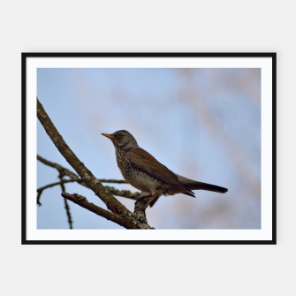 Miniature de image de Fieldfare on a branch Framed poster, Live Heroes