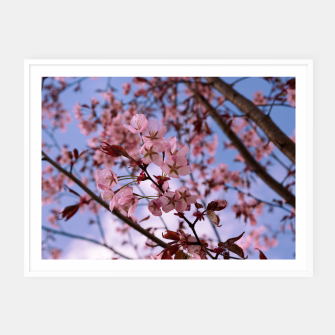 Miniatur Cherry blossom 2 Framed poster, Live Heroes