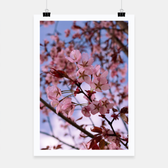 Miniatur Cherry blossom 2 Poster, Live Heroes