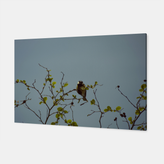 Great tit on a branch Canvas thumbnail image