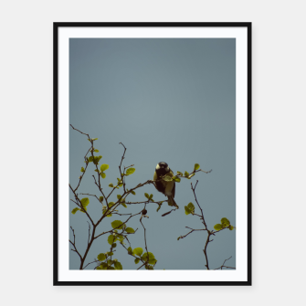 Great tit on a branch Framed poster thumbnail image