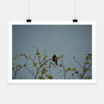 Great tit on a branch Poster thumbnail image