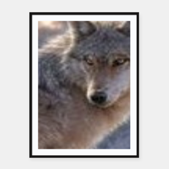 Wolf Framed poster thumbnail image
