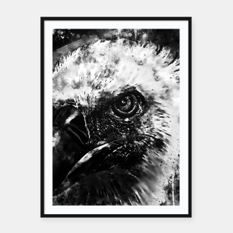 Thumbnail image of face of a vulture wsbw Framed poster, Live Heroes