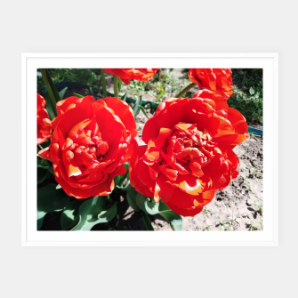 Thumbnail image of tulips Framed poster, Live Heroes