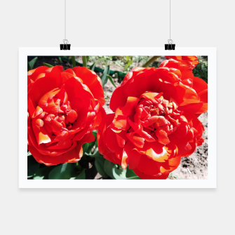Thumbnail image of tulips Poster, Live Heroes