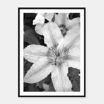 clematis 1 bw Framed poster thumbnail image