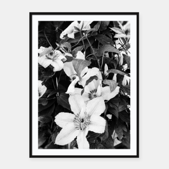 clematis 2 bw Framed poster thumbnail image